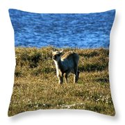 Caribou Fawn Throw Pillow
