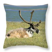 Caribou Resting Throw Pillow