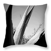 Carmel Mission Agave In B And W Throw Pillow