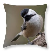 Carolina Chickadee 2 Throw Pillow