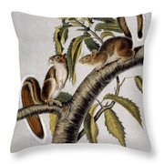 Carolina Grey Squirrel Throw Pillow
