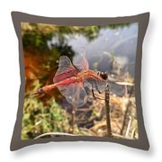 Carolina Saddlebag Dragonfly Throw Pillow