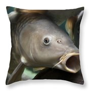 Carp Throw Pillow by Jane Rix