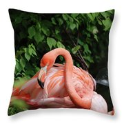 Carribean Flamingo Bird Ruffling His Feathers Throw Pillow