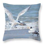 Caspian Tern Feeding Young Throw Pillow