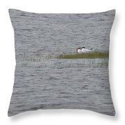 Caspian Terns Throw Pillow