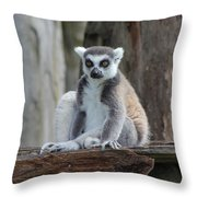 Casual Lemar  Throw Pillow