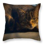 Cat 2 Throw Pillow