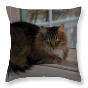 Cat By Candlelight Throw Pillow