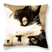 Cat Days Of Summer Throw Pillow
