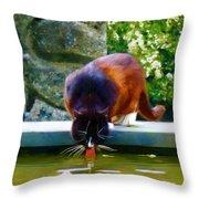 Cat Drinking In Picturesque Garden Throw Pillow