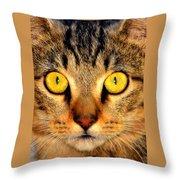 Cat Face Portraiture Throw Pillow