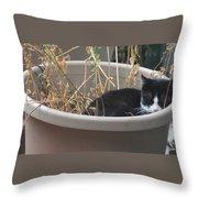 Cat In Flower Pot. Throw Pillow
