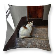 Cat On Steps Throw Pillow