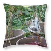 Cat Playing In Flowerpot Throw Pillow
