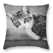 Cat Portrait 4 Throw Pillow