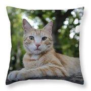 Cat Volterra Italy Throw Pillow