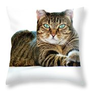Cat With Bright Eyes Throw Pillow