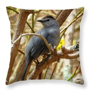 Catbird In Spring Throw Pillow