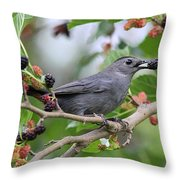 Catbird Scores A Mulberry Throw Pillow