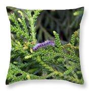 Caterpillar On Branch Throw Pillow