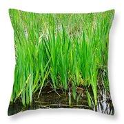 Cattail Green Throw Pillow