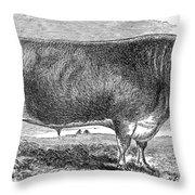 Cattle, C1880 Throw Pillow by Granger