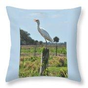 Cattle Egret Throw Pillow