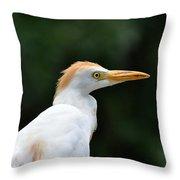 Cattle Egret Close-up Throw Pillow