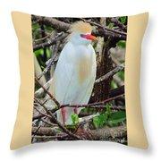 Rainbow Bill Cattle Egret Throw Pillow