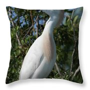 Cattle Egret Pose Throw Pillow