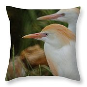 Cattle Egrets Dry Brushed Throw Pillow