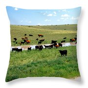 Cattle Graze On Reclaimed Land Throw Pillow