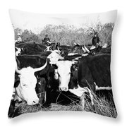 Cattle: Longhorns Throw Pillow