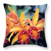 Cattleya Orchids Throw Pillow by Allan Seiden - Printscapes