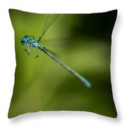 Caught In A Web Throw Pillow