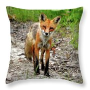 Cautious But Curious Red Fox Portrait Throw Pillow