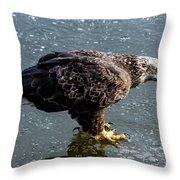 Cautious Eagle Throw Pillow