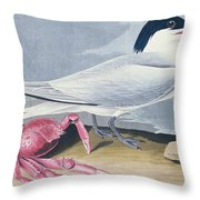 Cayenne Tern Throw Pillow by John James Audubon