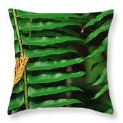Cedar And Fern Throw Pillow