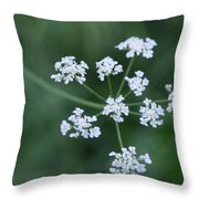 Cedar Park Texas Hedge Parsley Throw Pillow