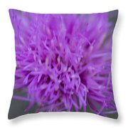 Cedar Park Texas Purple Thistle Throw Pillow