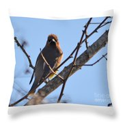 Cedar Wax Wing On The Lookout Throw Pillow