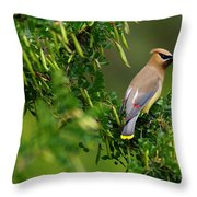 Cedar Waxwing #1 Throw Pillow