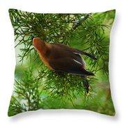 Cedar Waxwing Beauties 1 Throw Pillow