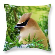 Cedar Waxwing Beauties 6 Throw Pillow