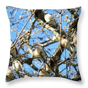 Cedar Waxwing Family Throw Pillow