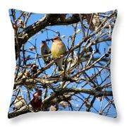 Cedar Waxwing II Throw Pillow