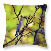 Cedar Waxwing With Windblown Crest Throw Pillow