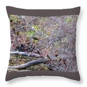 Cedar Waxwings Feeding 2 Throw Pillow
